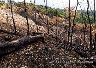 Monte Faiito, alberi bruciati, 2017