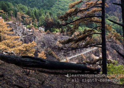 Monte Faito, tronco d'albero carbonizzato da incendio