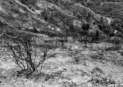 Monte Faito, pendici ovest dopo l'incendio